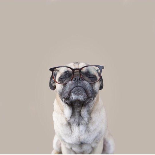 Beautiful Chubbie Chubby Adorable Dog - 435717e4d10badc9c631d30c221d130f--funny-photos-dog-photos  You Should Have_445869  .jpg