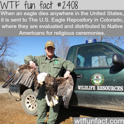What happen when an eagle dies? -WTF funfacts