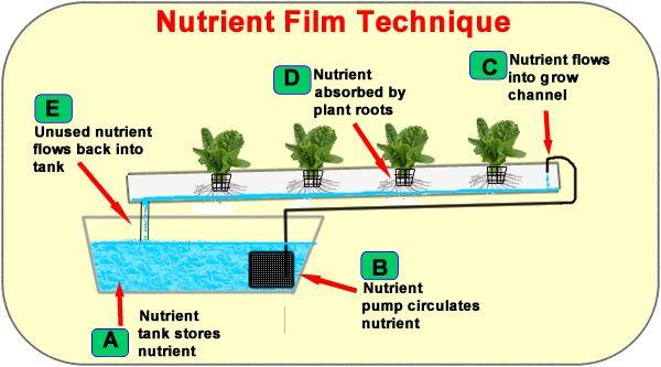 nutrient film technique nft hydroponics system setup