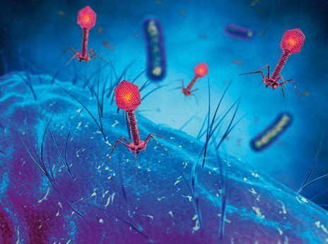 LE RENOUVEAU DE LA PHAGOTHÉRAPIE Une pratique ancienne contre les maladies infectieuses. Nous fêtons cette année le centenaire de la découverte des virus capables de détruire les bactéries, appelés bactériophages par un médecin français, Félix d'Hérelle, qui les a isolés en 1917 | Rebelle-Santé