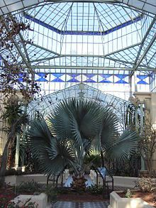 The Palm House at the Adelaide Botanic Gardens. Adelaide, South Australia.
