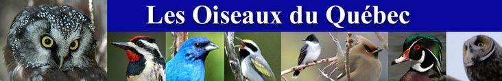 Bird Clubs - Quebec #parrot #petbirds #companionparrot #birdclub