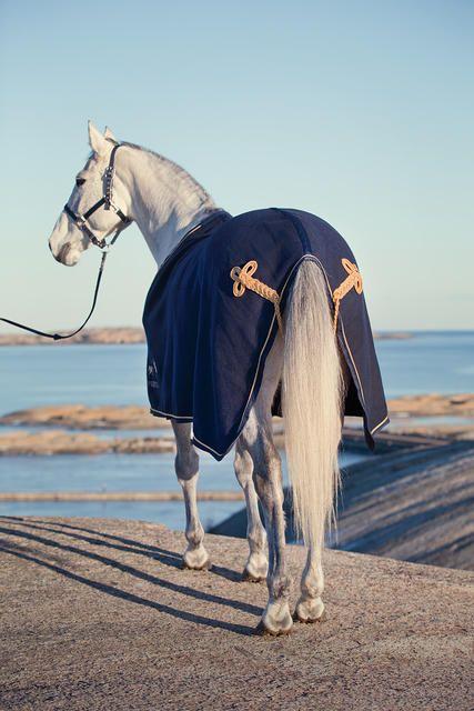 Beach and Horse