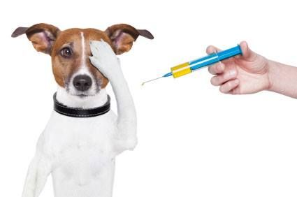 La prevenzione è il sistema migliore per vivere a lungo! Vaccinazioni contro la Leishmaniosi