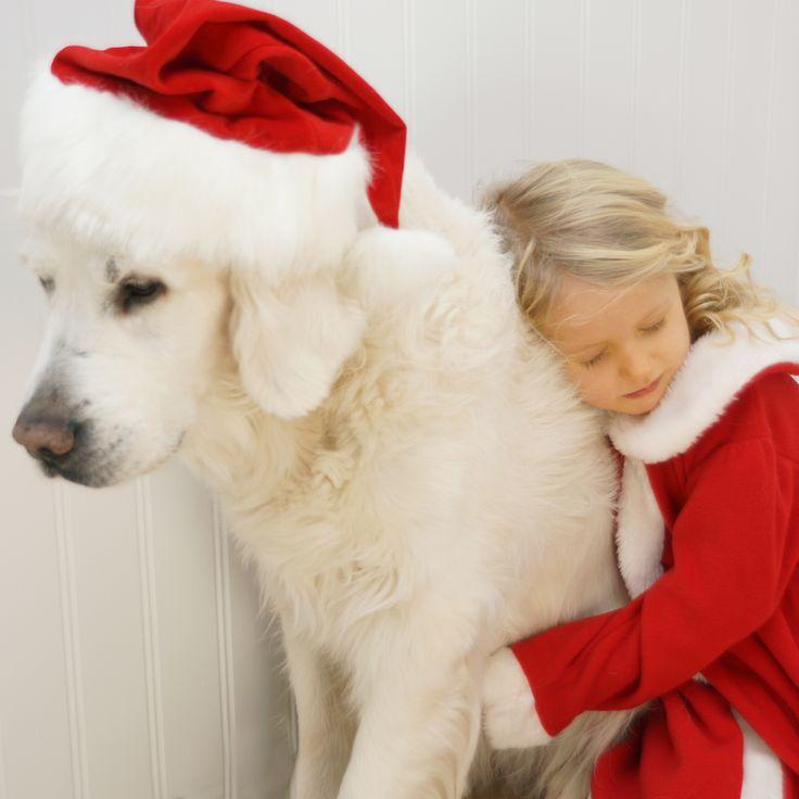 Mans best friend, santa, golden retriever, love, sweet, xmas, christmas, jul