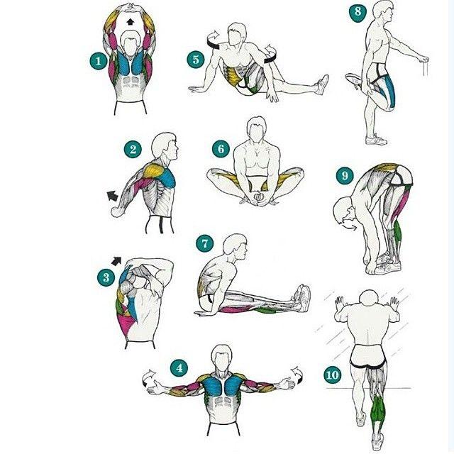 Сохраните себе простую схему упражнений, которые подходят для пред и постренированной растяжки. Предтренировочная растяжка -- неглубокая, делается вместе с суставной разминкой.Постренировочная -- финальный аккорд любой тренировки, тянемся поглубже и подольше, но в 10 минут укладываемся. Этого достаточно. Постренировочная растяжка и отдельная тренировка по растяжке --разные вещи. Совмещать не стоит. Лучше -- успеть поесть в течение 30 минут после тренировки. Не спрашивайте меня о том, что…