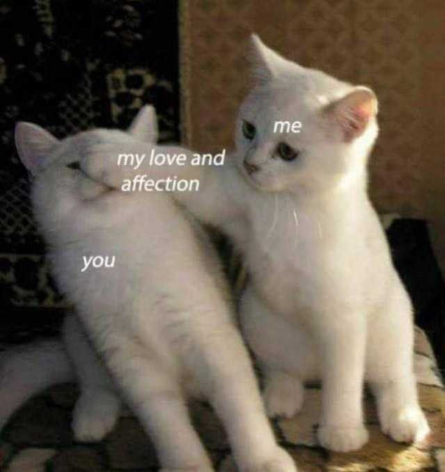 The Importantance Of Showing Affection Loveisconfusing Cat And Dog Memes Cute Love Memes Funny Cat Memes
