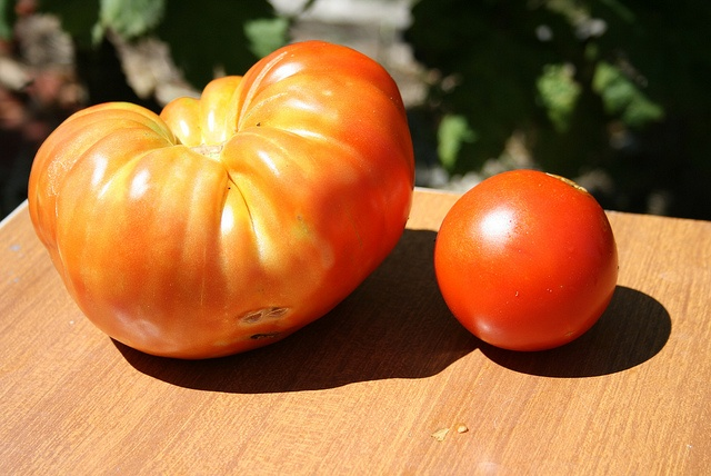 The Crmnica tomato - as big as a small melon!