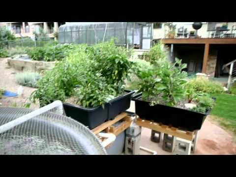 Aquaponic gardening a step by step guide to growing fish for Balcony aquaponics