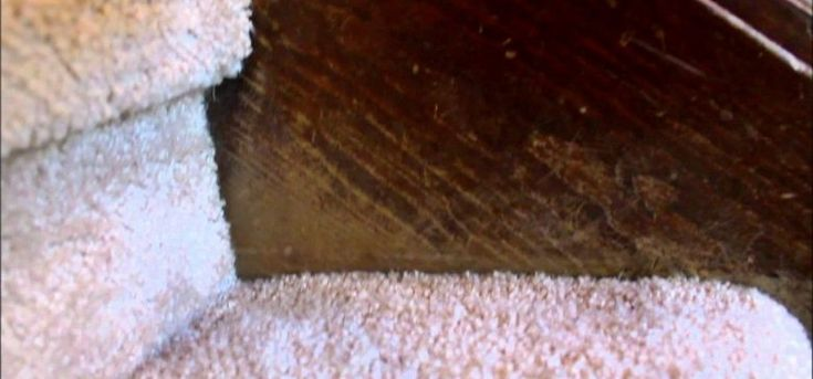 ScratchedWood | Her 2-Ingredient Solution for Repairing Scratched Wood
