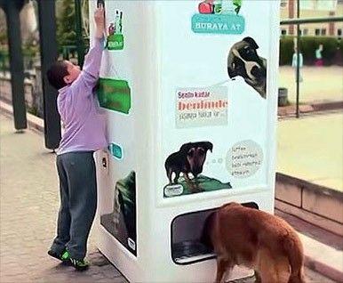 터키의 착한 자판기, 동물 사랑과 환경보호를 동시에 : 네이버캐스트