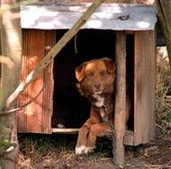 Dog relaxing in kennel