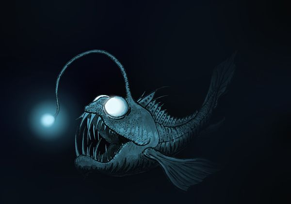Image: Deep Sea Anglerfish (© Bluegreen