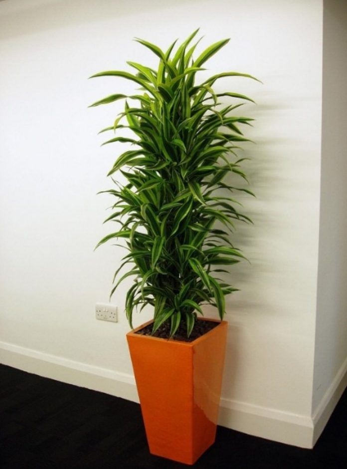 11 Houseplants That Don't Need A Lot Of Sunlight To Grow 400 x 300