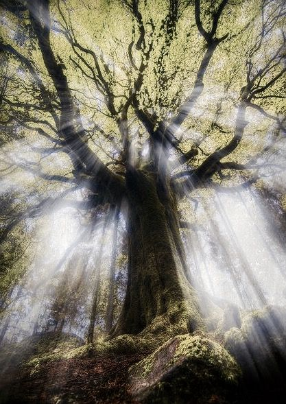 Divine rays: Broceliande Forest in Bretagne, France.