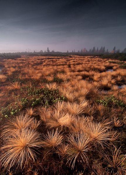 Jan Měchura: Podzim na rašeliništi