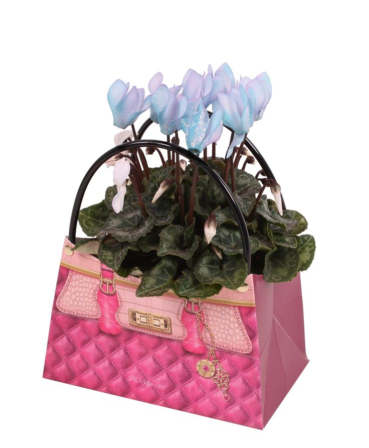 Make-Upz cyclamen. Available in Pink and Blue