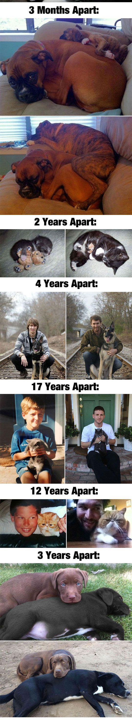 Before and after pics of pets growing up