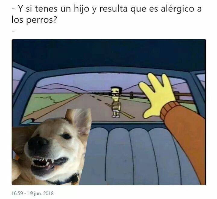 Yo Soy Alergica A Los Perros Memes Divertidos Memes Perros Memes