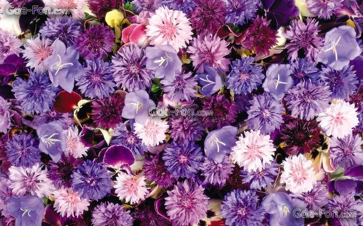 tapis de fleurs - Recherche Google