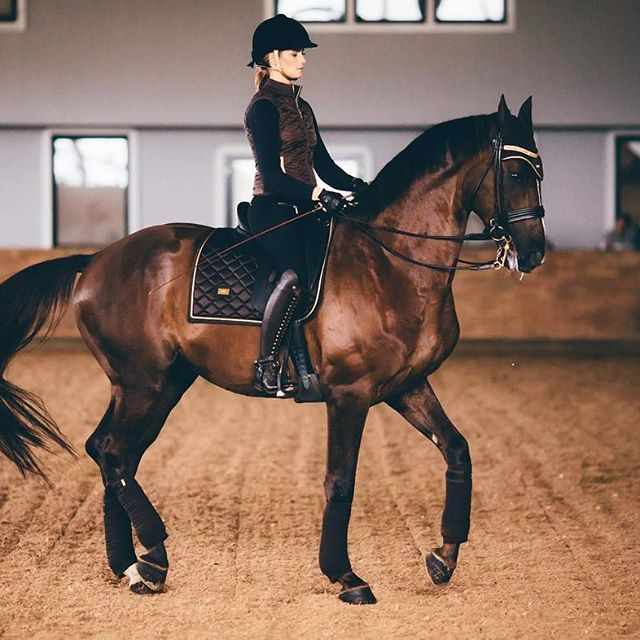 """(Open rp plz join) u walk past the indoor arena and see Vonder and meagen dancing their way through their dressage pratice """"hey wanna go for a ride near redwood forest after we finish?"""""""