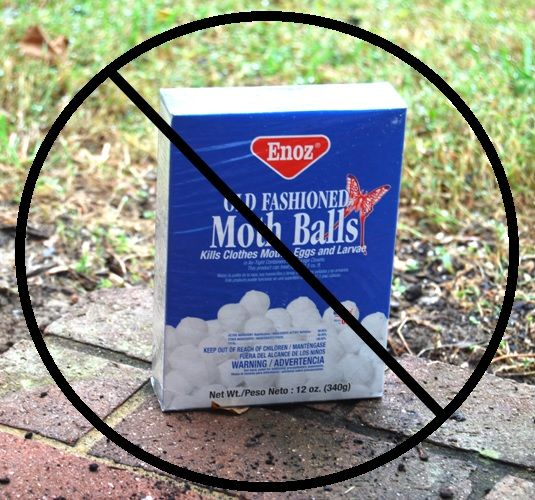 using mothballs in the garden to deter pests fact or