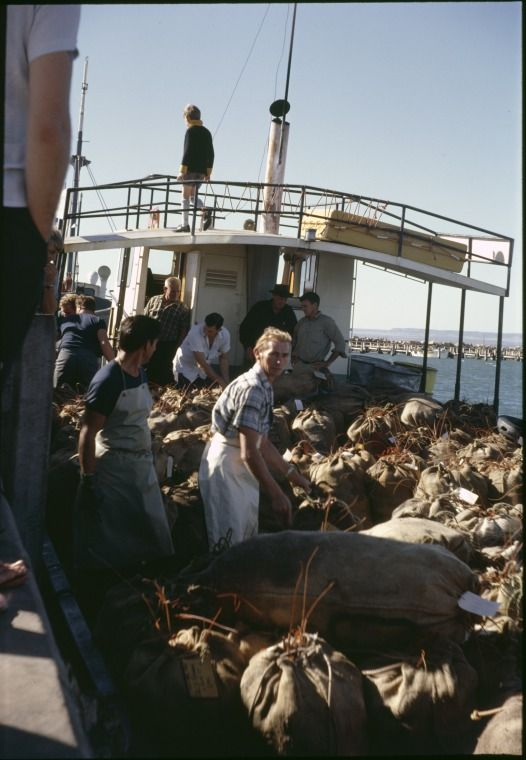 144843PD: A cray fishing boat arrives at Geraldton to unload the crayfish catch, 21 April 1968.  http://encore.slwa.wa.gov.au/iii/encore/record/C__Rb4567695__SCray%20fishing%20--%20Western%20Australia%20__Ff%3Afacetmediatype%3Av%3Av%3APhotograph%3A%3A__P0%2C7__Orightresult__U__X1?lang=eng&suite=def