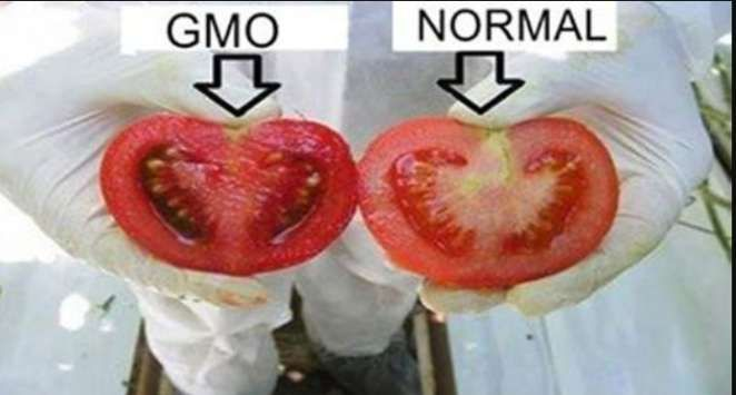 Zobacz jak bronić się przed zmodyfikowaną żywnością!