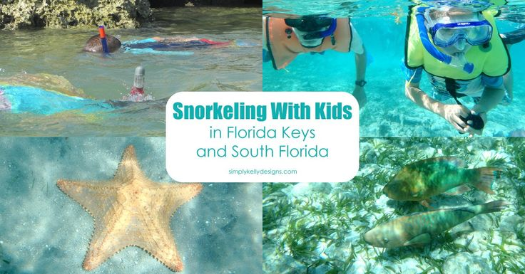 Highlights and tips for snorkeling with kids in the Florida Keys at John Pennekamp, Bahia Honda and in South Florida at Phil Foster Park.