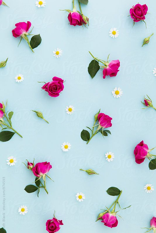 Summer flower background by Ruth Black