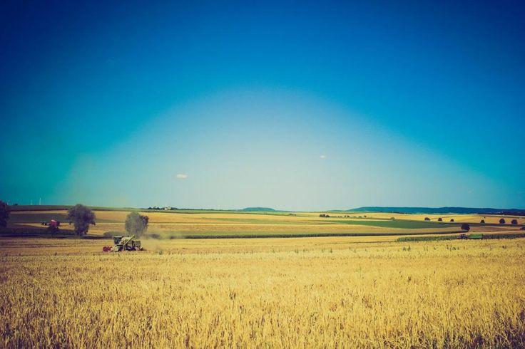 💬 Sky field summer agriculture - get this free picture at Avopix.com    ➡ https://avopix.com/photo/39656-sky-field-summer-agriculture    #field #grass #landscape #sky #rural #avopix #free #photos #public #domain