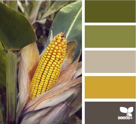 husked hues...yellow, green, and gray palette #color palettes