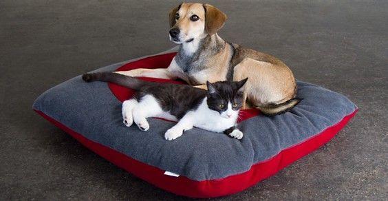 Como remover os pelos de cães e gatos