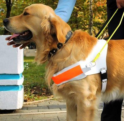 Laws about service dogs