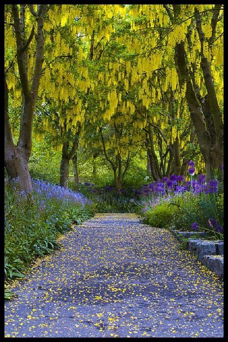 Laburnum Walk, Van Dusen Botanical Garden, Vancouver, B.C.
