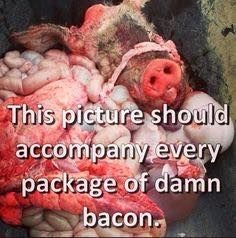 this picture should accompany every package of bacon; go #vegan