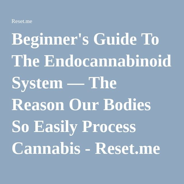 Beginner's Guide To The Endocannabinoid System — The Reason Our Bodies So Easily Process Cannabis - Reset.me