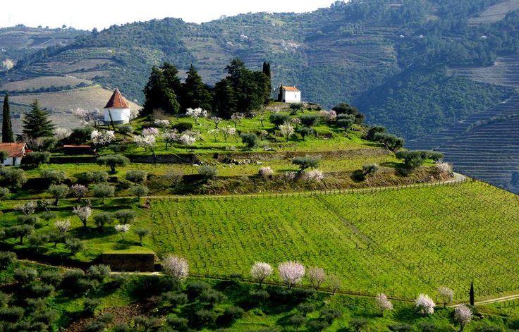 Quinta do Crasto, Douro.