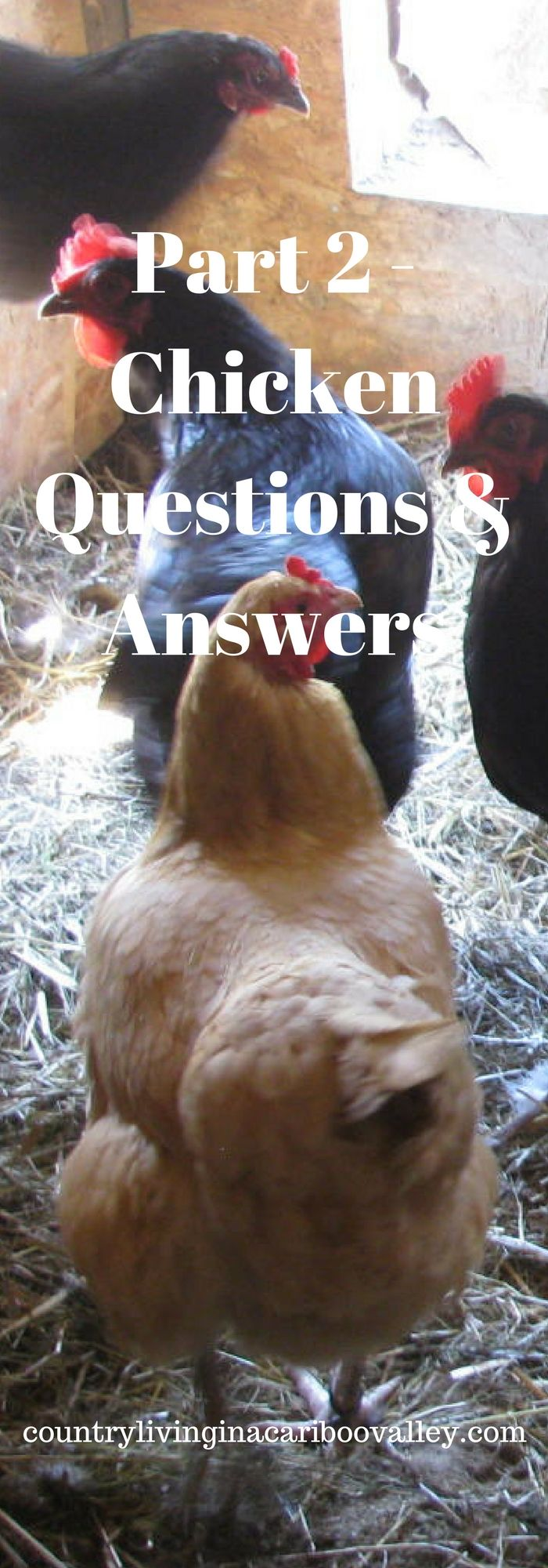 2860 best chickens the girls images on pinterest backyard