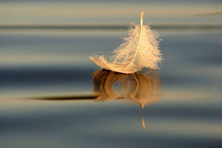Аюрведический центр красоты и здоровья «Живая вода»   ПОТЕНЦИАЛ ГОЛОДАНИЯ Голодание – одна из древнейших методик оздоровления организма. Махатма Ганди говорил, что голодание открывает ему двери в духо…