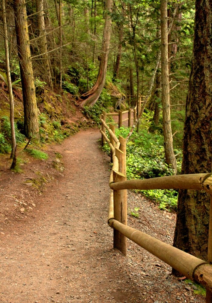 Hiking trail in Washington State