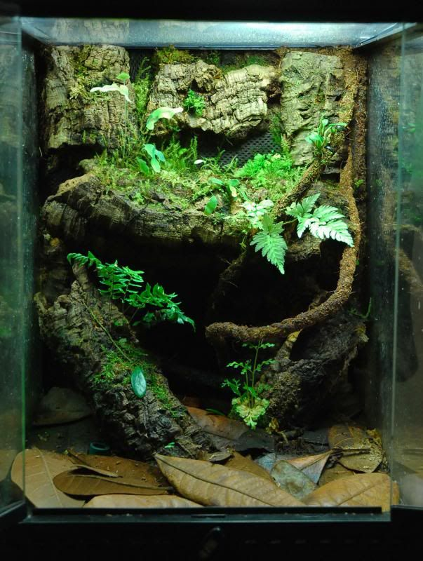 an exo terra done right vivarium inspiration pinterest more exo vivarium and terraria ideas. Black Bedroom Furniture Sets. Home Design Ideas