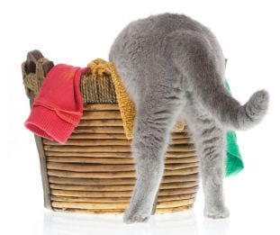 How to remove cat urine odor from laundry
