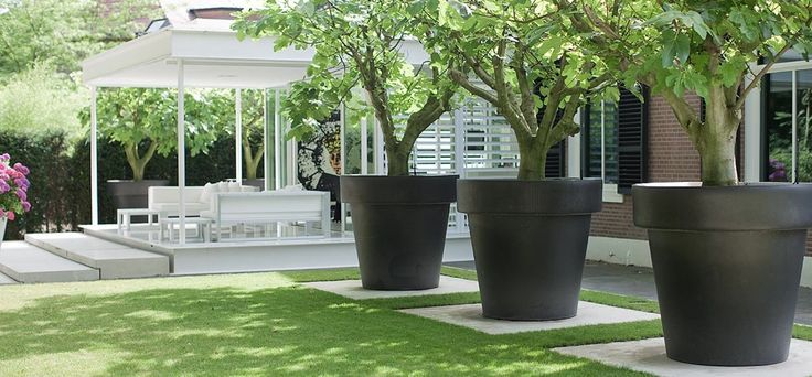 Trees in a pots | #Planters | Garden Design | By Bob Manders Architects