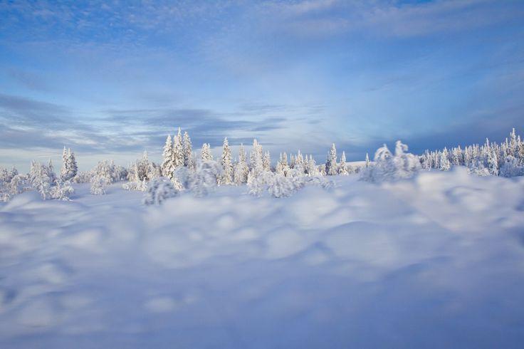 Lofsdalen, Northern #Sweden. Photo by Mikko Nikkinen. #skandinavisk
