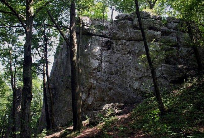 """Rezerwat przyrody """"Zielona Góra"""""""