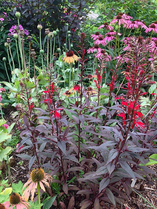Bog garden plants zone 3 garden planting zone combo 1 bog garden 19 best flowers i have images on pinterest bog plants patio mightylinksfo
