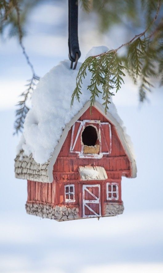 Barn Bird House Covered In Snow