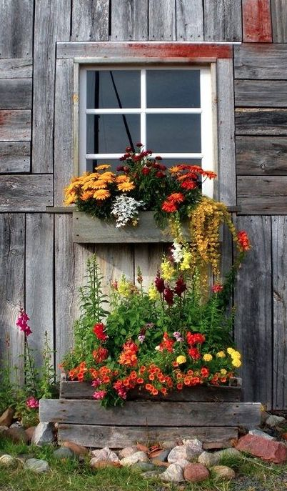 Wildflowers on a weathered wood wall.