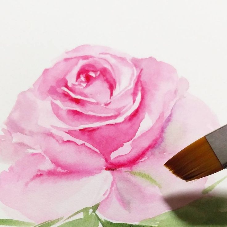 Using Angular brush to paint freehand rose. Hope to run a workshop with this brush soon!! October Workshop Schedules are out!! 9/10 Mon 2.30-6pm Floral watercolor workshop 7/10 Sat 2.30-6.30pm Triangle brush workshop ( 1 seat left) 14/10 Sat 2.30-6pm Birdswreath Watercolor workshop  21/10 Sat 2.30-6pm Animals Watercolor workshop 23/10 Mon 2.30-6pm New Floral Watercolor workshop 28/10 Sat 2.30-6pm New Floral Watercolor workshop  #illustration #sgworkshop #art_we_inspire #watercolours…